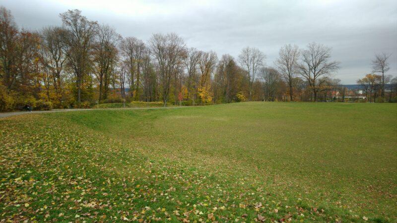 Der Wald auf der Seite zum Leutewitzer Park