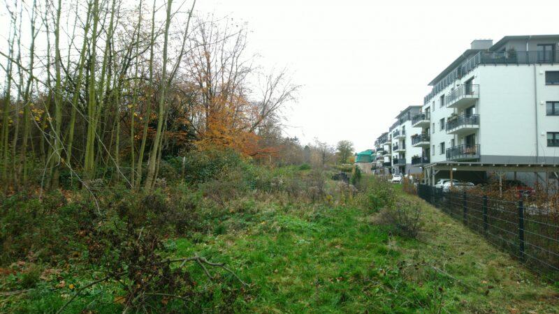 Hinter den Neubauten ist ein Zaun zum verbleibenden Wald. Hier gleich links die schützenswerte Rotbuche.